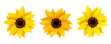 Set Of Three Sunflowers. Vector Illustration.