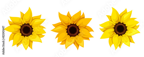 Foto Set of three sunflowers. Vector illustration.