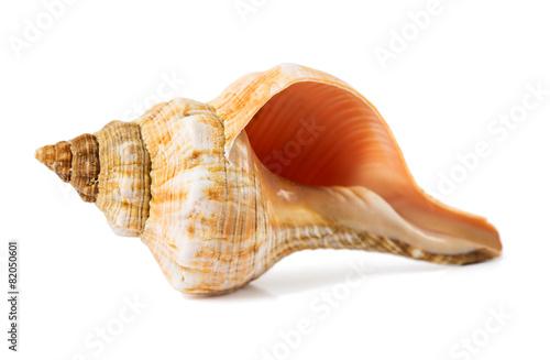 seashell on a white background Fototapeta
