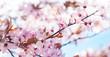 canvas print picture - Rosa Blüten, Blütenzweige
