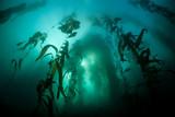 Kelp and Sunlight