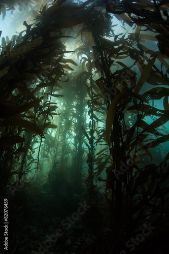 Tuinposter Koraalriffen Giant Kelp and Light