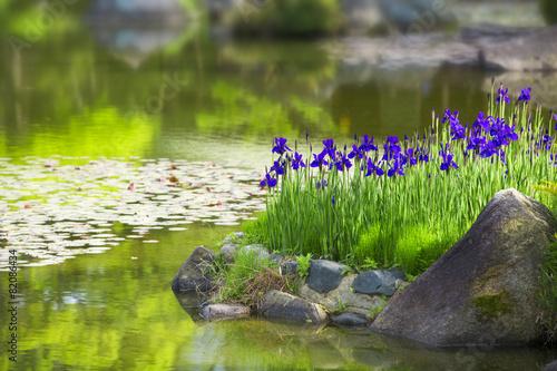 In de dag Iris 庭園の花菖蒲