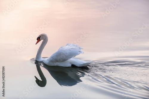Deurstickers Zwaan Sunset swan