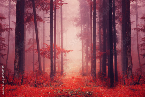 Fotobehang Crimson Red colored foggy forest path