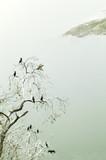 Ptaki na drzewie - 82099871