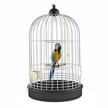 Parrot Cage Isolated