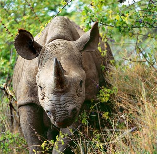 Spoed Foto op Canvas Neushoorn rhino