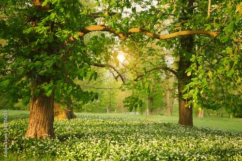 Obraz Światło słoneczne na wiosnę w zielonym lesie - fototapety do salonu