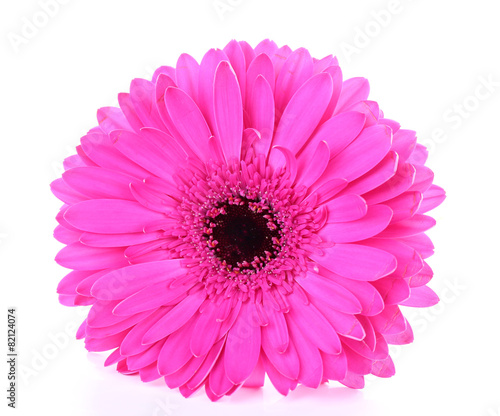 Foto op Aluminium Gerbera Beautiful bright gerbera isolated on white