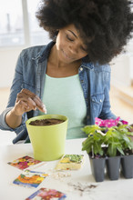 Mixed Race Woman Planting Flowers And Seeds