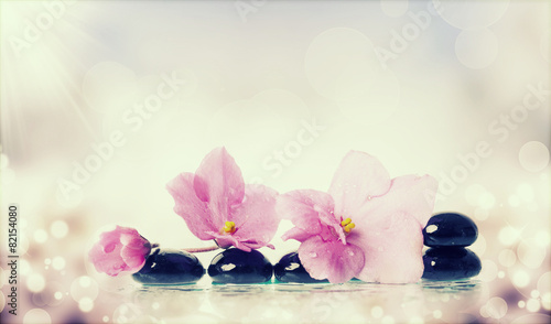 Garden Poster Orchid Black spa stones and flower on colorful background