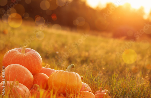 Aluminium Prints Autumn pumpkins outdoor