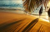 Plaża i cień palmy