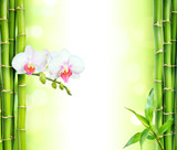 Fototapeta Bamboo - white orchid with bamboo - beauty and spa background