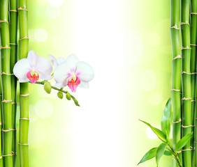 Panel Szklany Podświetlane Drzewa white orchid with bamboo - beauty and spa background