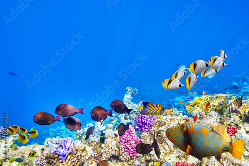 Photo Underwater world with corals and tropical fish.