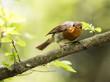 Wild bird on the branch