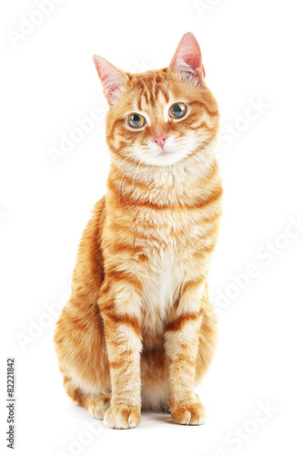Fotografija Portrait of red cat isolated on white