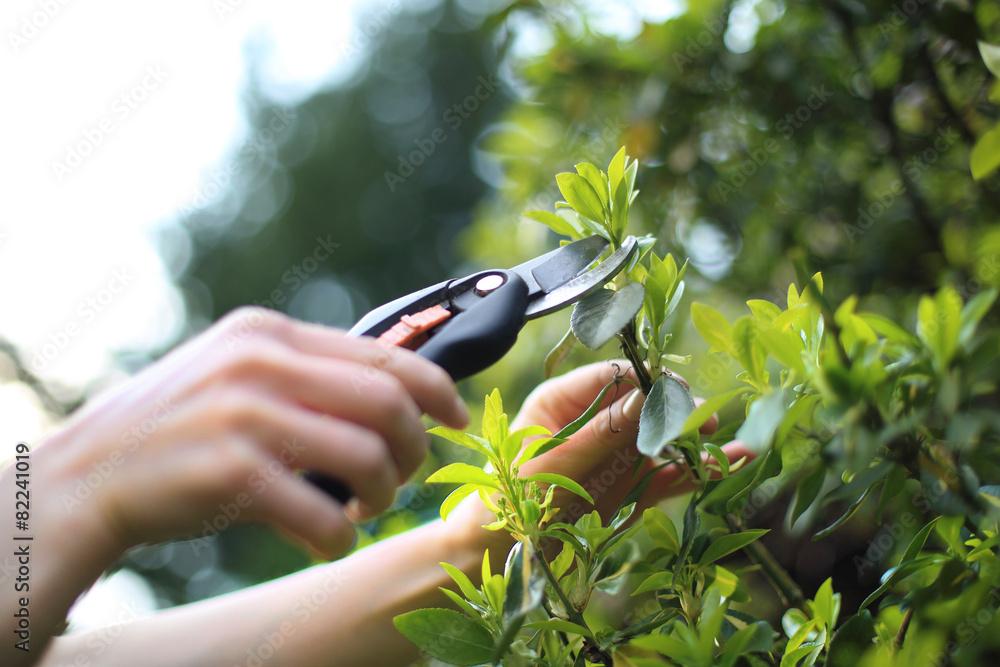 Fototapeta Pielęgnacja roślin w ogrodzie