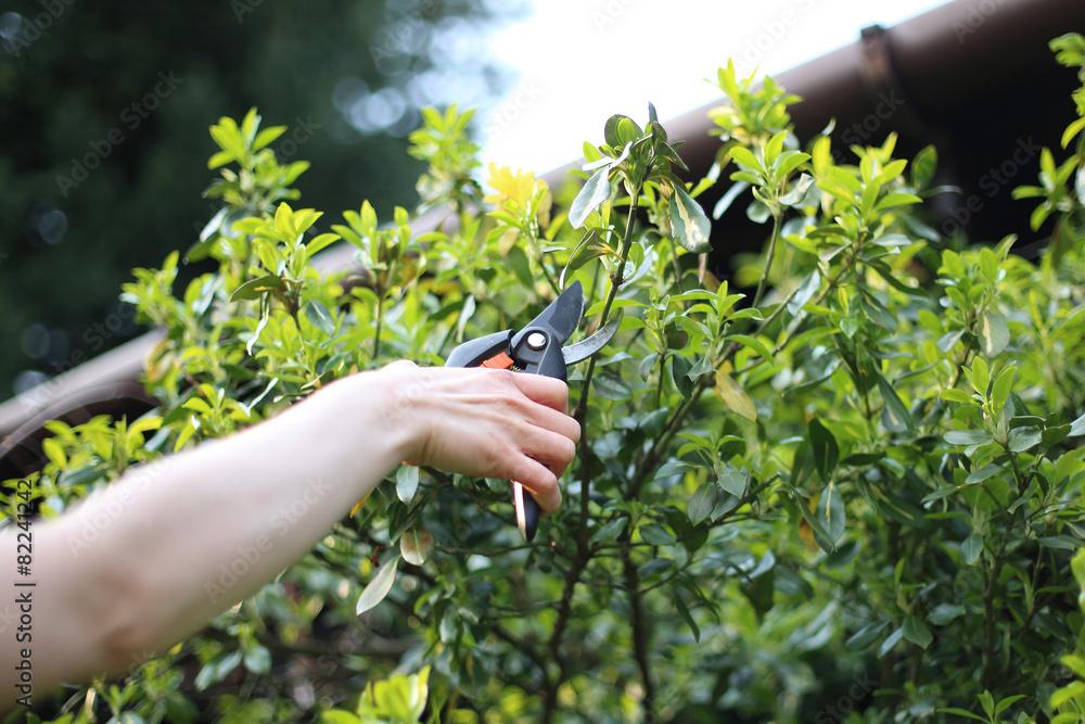 Fototapeta Wiosenne prace w ogrodzie
