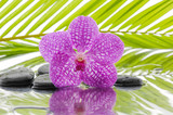 Fototapeta Kuchnia - spa concept with orchid and wet black stones with palm leaf