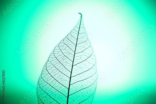 Poster Squelette décoratif de lame Skeleton leaf on green background, close up