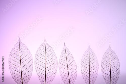 Poster Squelette décoratif de lame Skeleton leaves on purple background, close up