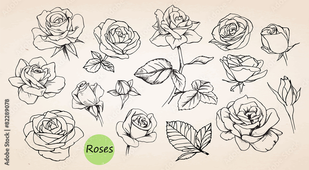 Fototapety, obrazy: Set of hand drawn roses. Vector