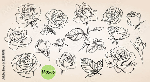Set of hand drawn roses. Vector Canvas Print