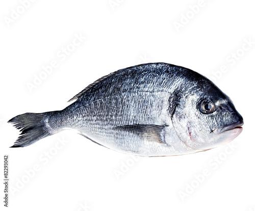 Poster Fish Dorado fish isolated on white background.