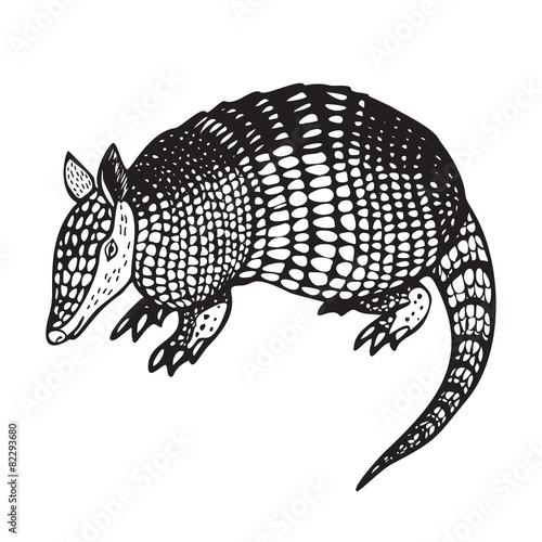 Armadillo vector illustration Wallpaper Mural