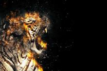 Burning Tiger Over Black Backg...