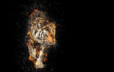 Burning tiger over black background