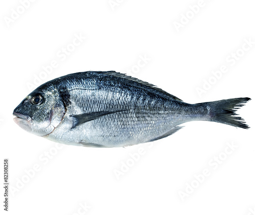 Fotografie, Obraz  Dorado fish isolated on white background.