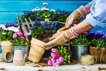 Work In The Garden, Planting Pots