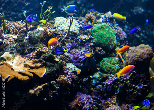 Poster Sous-marin tropical fishes meet in blue coral reef sea water aquarium. Unde
