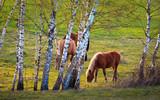 Wiosenne Konie