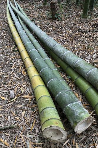 Papiers peints Bambou bamboo plants