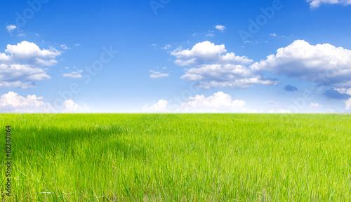 Foto auf Leinwand Lime grun Landscape of Thai rice field under blue sky and clound