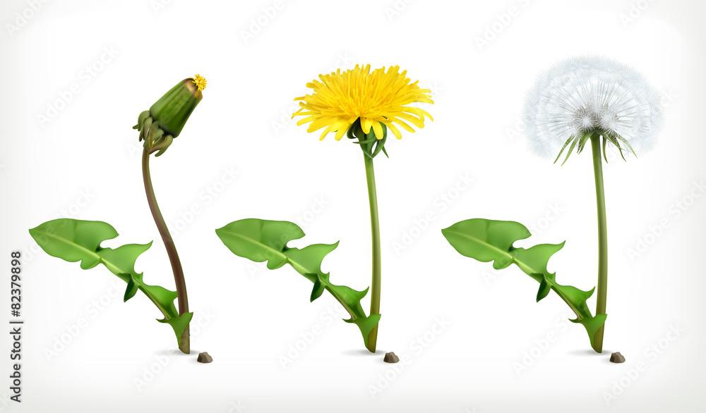 Fototapety, obrazy: Dandelion flowers, vector icon set