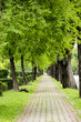 Walk into the Tree