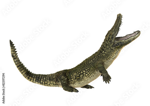 Tela American Alligator