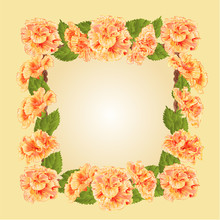 Frame With Yellow Hibiscus Vector
