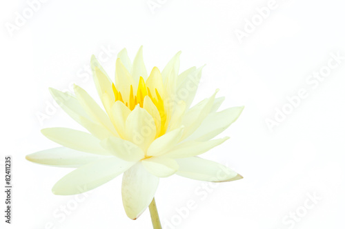 Photo Stands Water lilies white lotus flower isolated on white background (water lily)