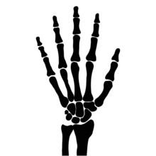 Hand Bones