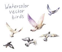 Pigeons Watercolor, Vector Set Of Flying Birds