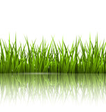 Fototapeta Kitchen - Green grass lawn with reflection on white. Floral nature spring