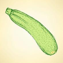 Sketch Tasty Zucchini In Vintage Style