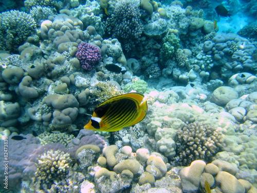 Fototapety, obrazy: коралловый пейзаж